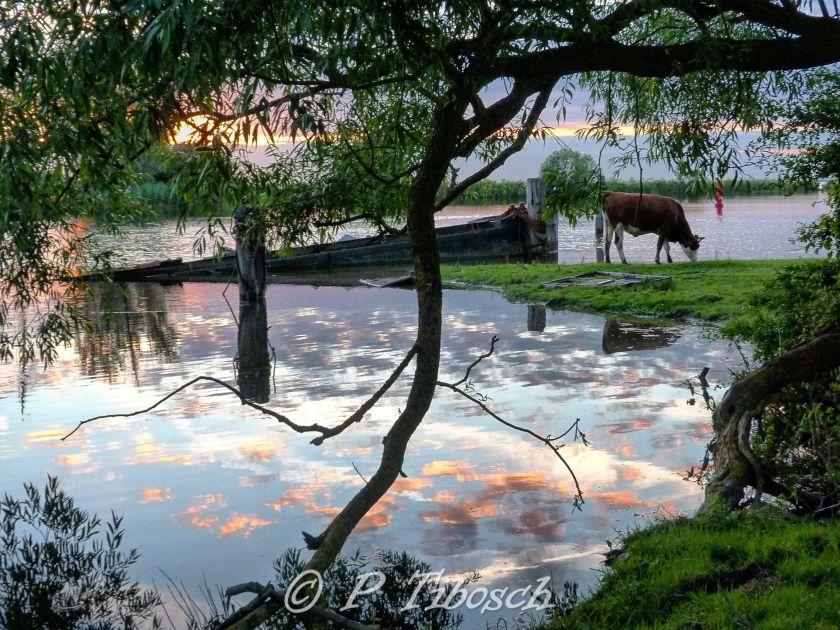 FotoPassie NR13